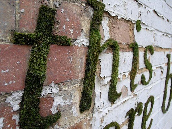 savvy housekeeping moss lettering on a wall. Black Bedroom Furniture Sets. Home Design Ideas