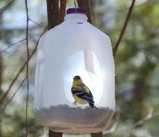 savvyhousekeeping 10 ways to recycle a milk jug bird feeder