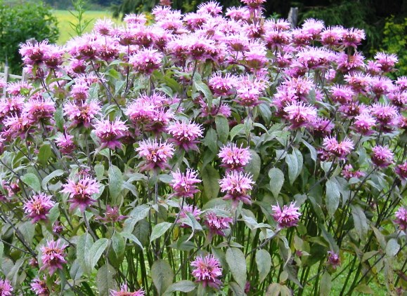 El color de las flores que atraen a los colibríes | Inicio Guías | Puerta SF