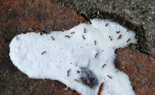 Savvy Housekeeping 187 How To Get Rid Of Outdoor Ants