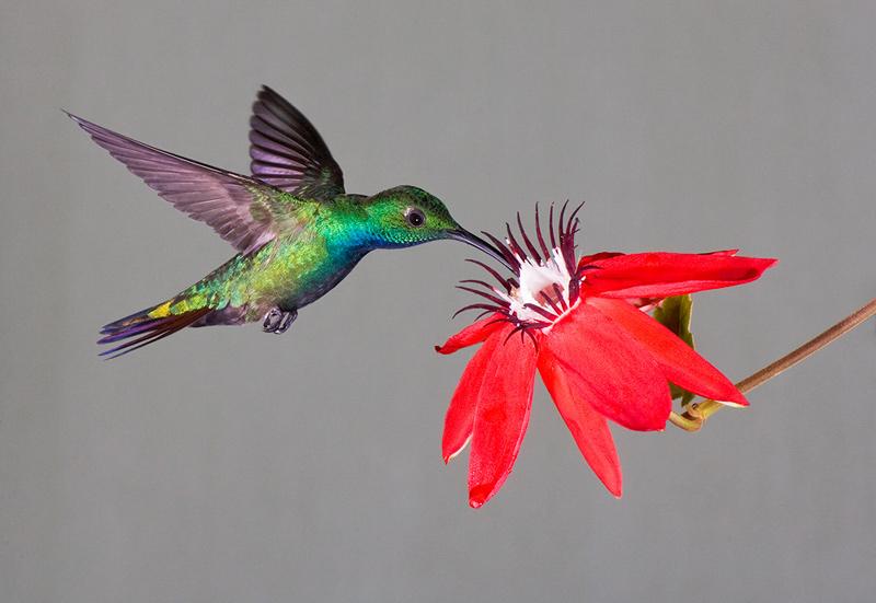 Consejos de Debbie para atraer y alimentar a colibríes