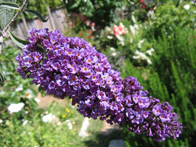 Atraer a colibríes a su jardín | Horticultura y Pest Noticias
