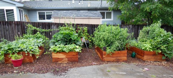 savvyhosuekeeping all about raised beds