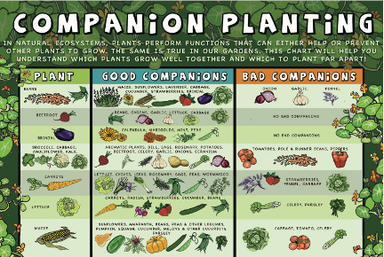 Great Check Out This Chart On Companion Planting. Click The Image For The Full  Version.