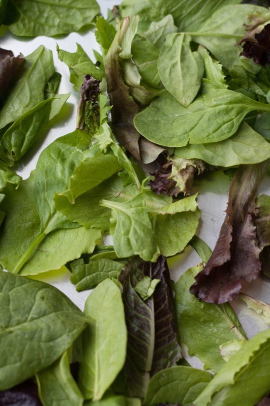 10-2014 Final Lettuces-2